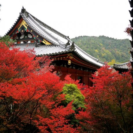 Храм Бисямондо осенью