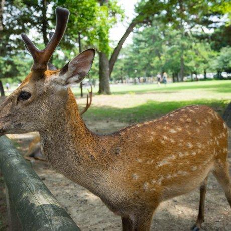 Прогулка по парку Нары