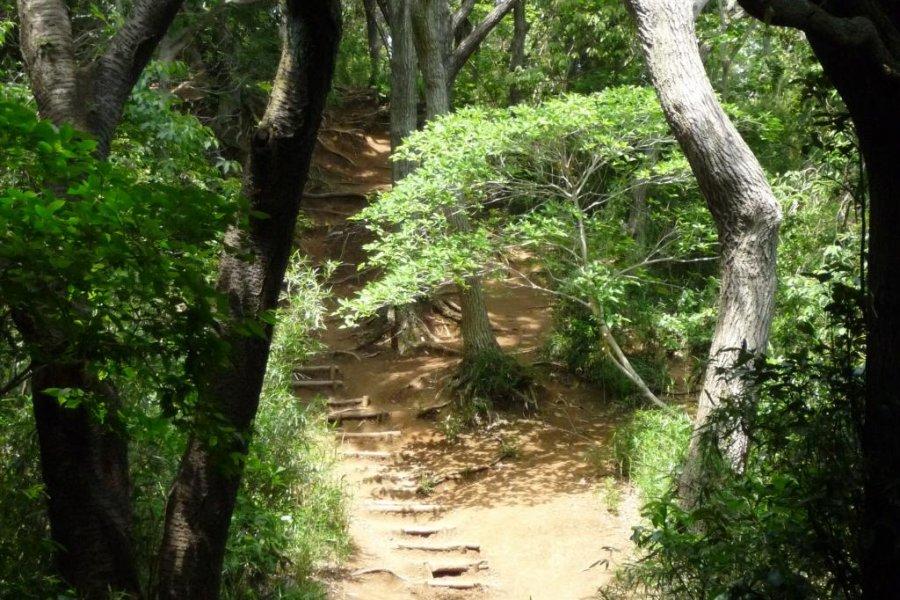 Пешая тропа Дайбуцу, Камакура