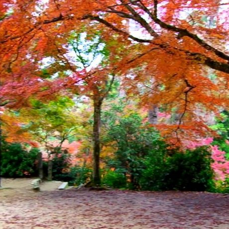 Парк Момидзидани в Миядзиме