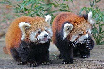 Зоологический Парк Чибы