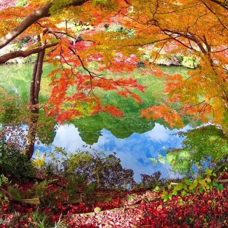 Парк Кодзё в Такаоке
