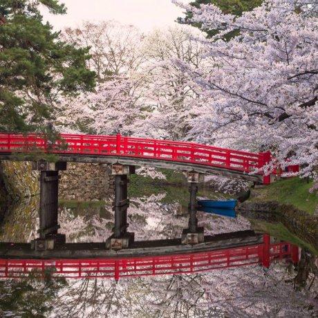 Запуск туров от Japan Travel!