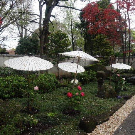 Сад пионов в Уэно Тосёгу