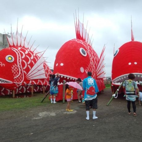 Фестиваль морского леща в Тоёхаме