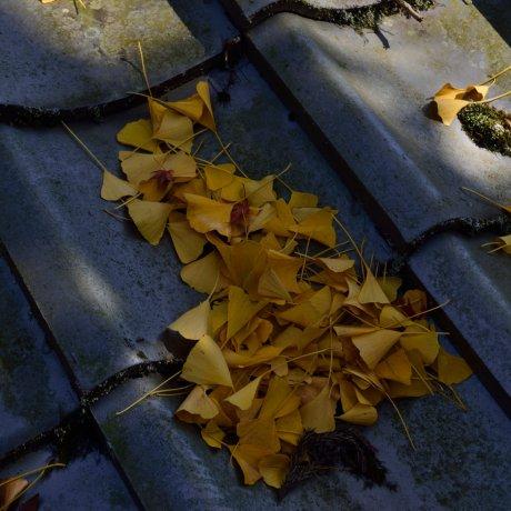 Осень в 88 храме острова Сикоку