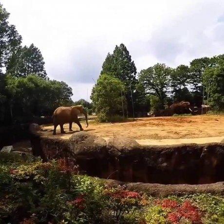Зоопарк Сэндай Ягияма
