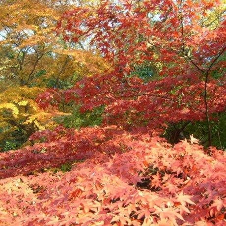 Осень в парке Уэно