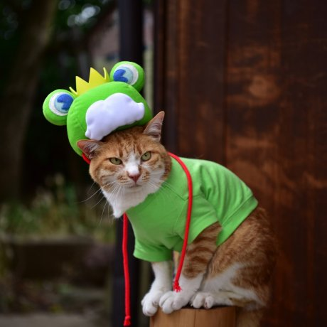 Ежегодный фестиваль лягушек