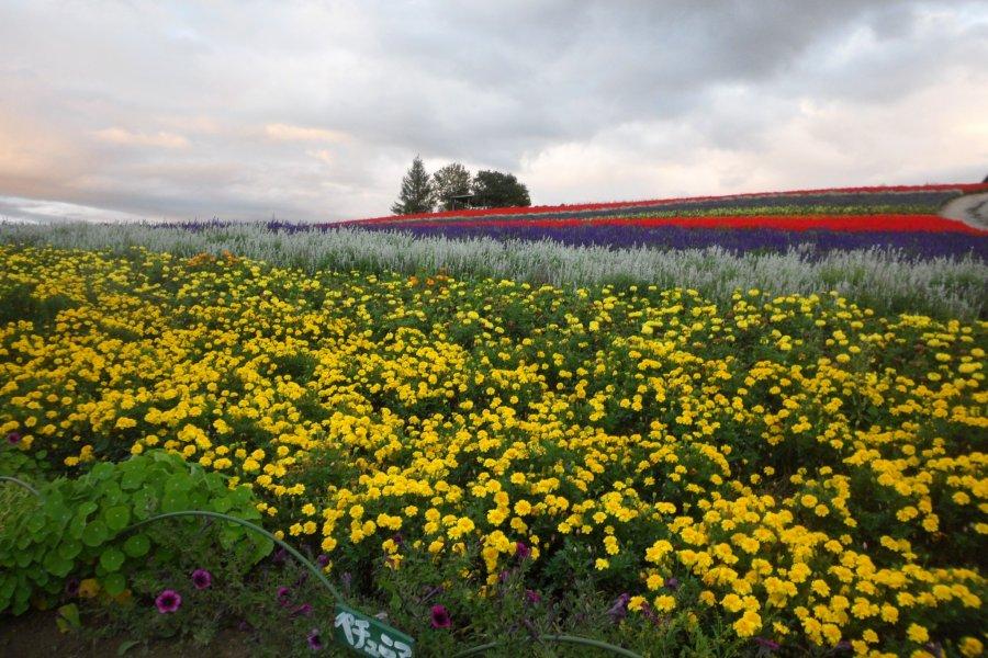 Цветочные поля Биэй