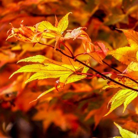 Осенние краски в Никко