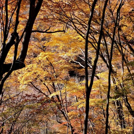 Осенняя прогулка по долине Нисидзава