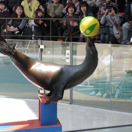 Особенные события в аквариуме Миядзимы