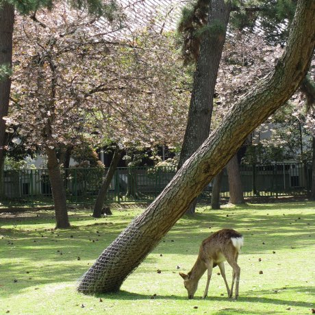Сады в парке города Нара