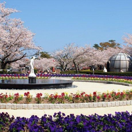 Весенние фестивали в Ямагути
