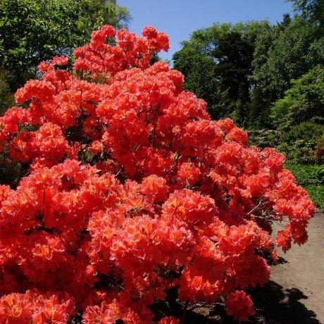 Ботанические сады Саппоро