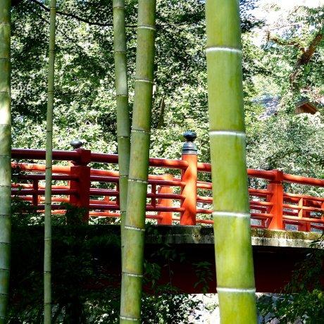 Бамбуковая роща Сюдзэн-дзи