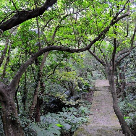 Суэёси Коэн на Окинаве