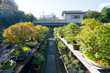 Omiya Bonsai Village